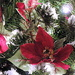 Poinsettia decorations! by homeschoolmom
