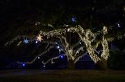 25th Dec 2013 - Merry Christmas