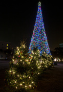 22nd Dec 2013 - Marion Square