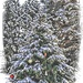 Perfect Christmas by digitalrn