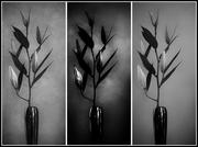 28th Dec 2013 - Study in Black and White