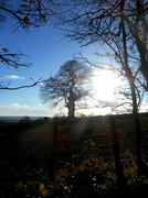 28th Dec 2013 - A lovely crisp cold wintry day....