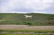 9th Sep 2010 - White horse