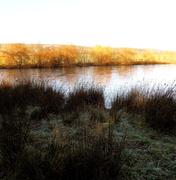 30th Dec 2013 - A frosty scene....