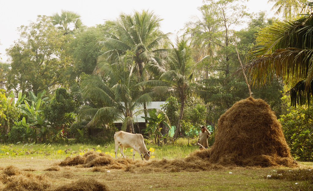 Rural Cambodia by lily