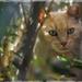 Kitty by jin1x