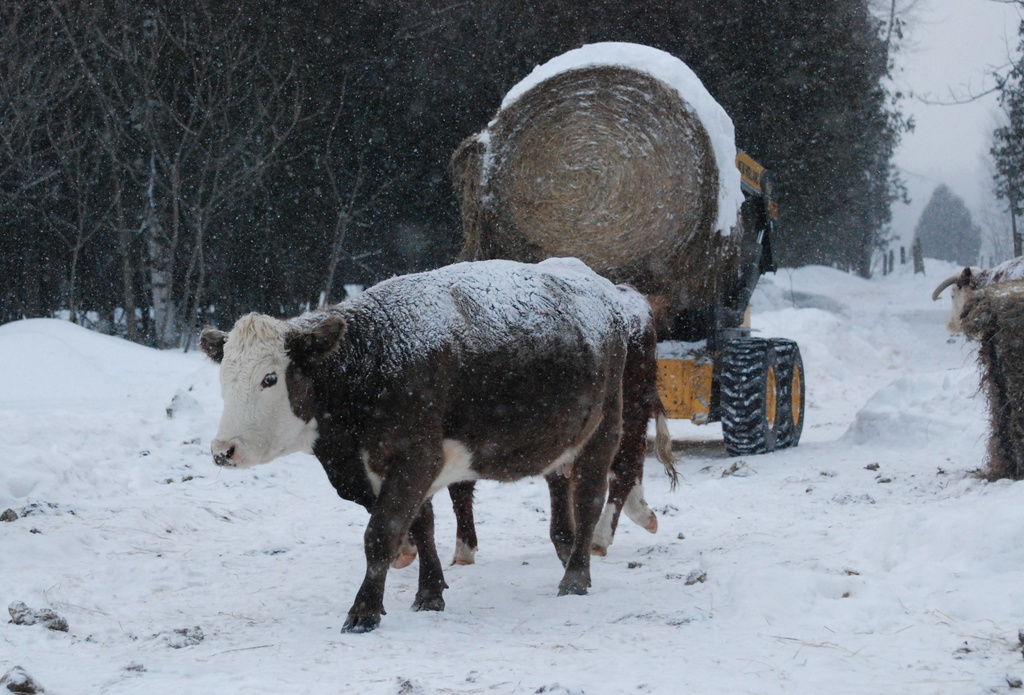 Supper is Served by farmreporter