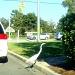 Brazen Bird! by stownsend