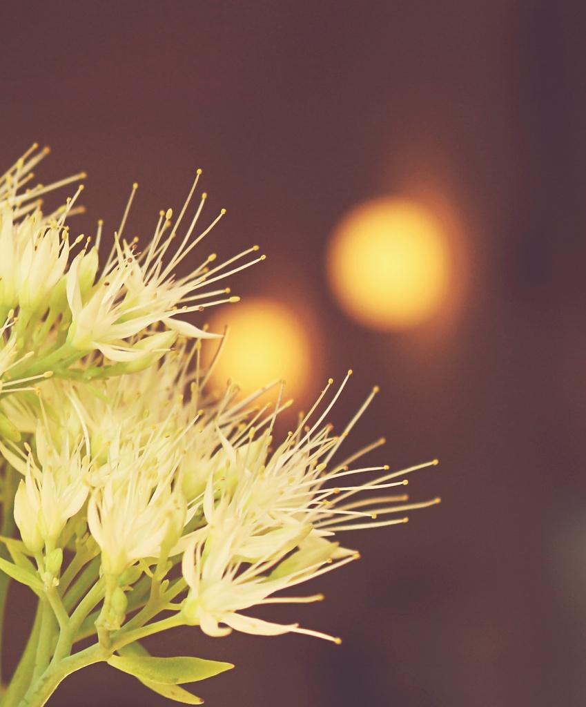 Hazy beauty by lily