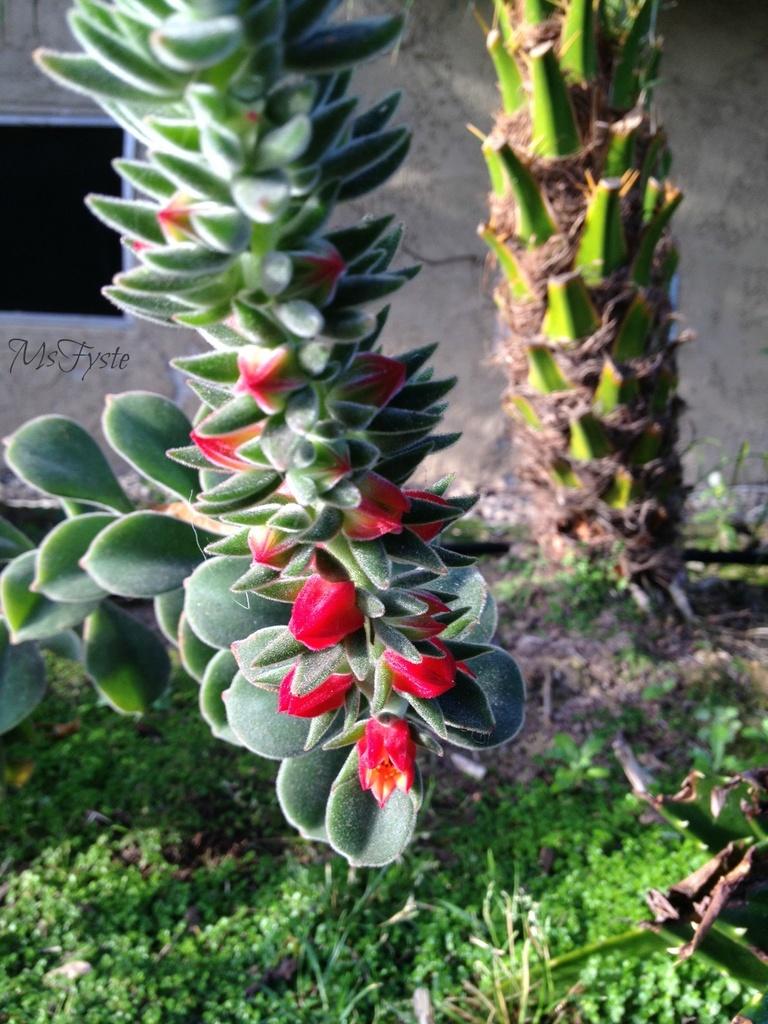 Pretty Twirly Succulent  by msfyste