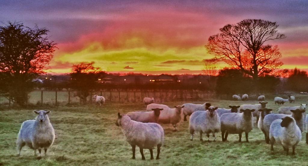 Shepherd's Delight by jesperani