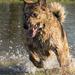 Soggy Doggy! by shepherdmanswife