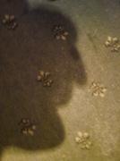 6th Jan 2014 - lucky shadow