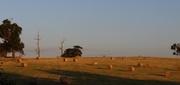 7th Jan 2014 - Freshly rolled hay bales..