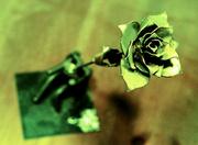 6th Jan 2014 - Metal Rose
