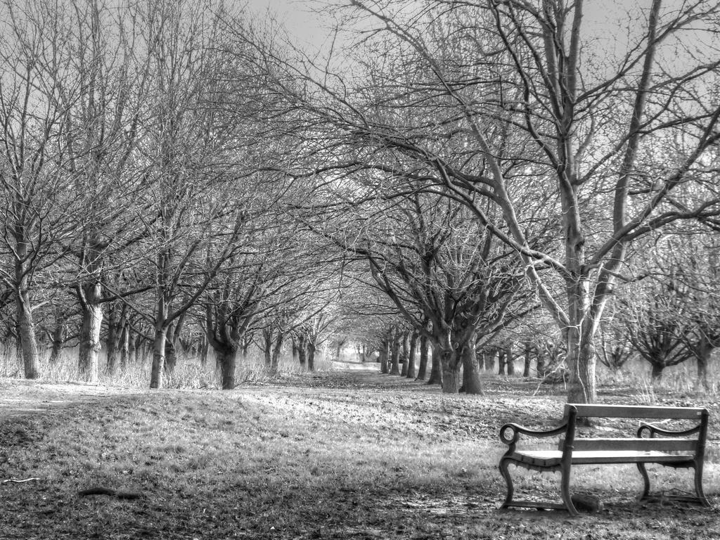 Trees In Winter by carolmw