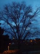 9th Jan 2014 - Early morning skies