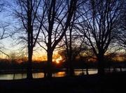 9th Jan 2014 - Sunset through the trees