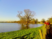 11th Jan 2014 - Bright sun and  the floods