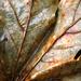 Leaf Resistence by nanderson