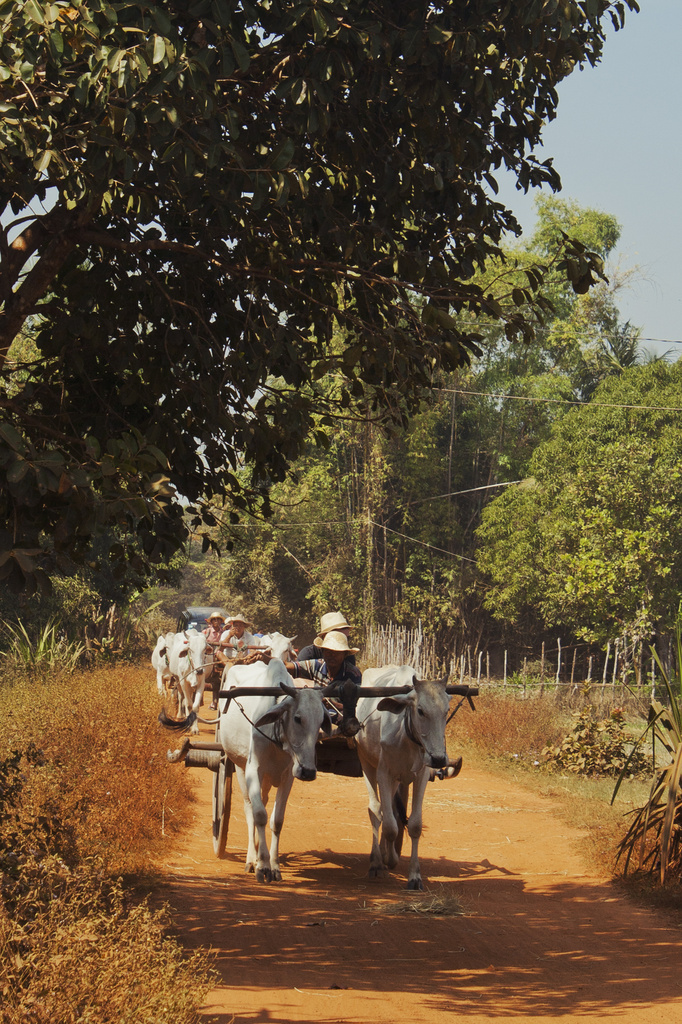 Ox-carts on the dusty road by lily