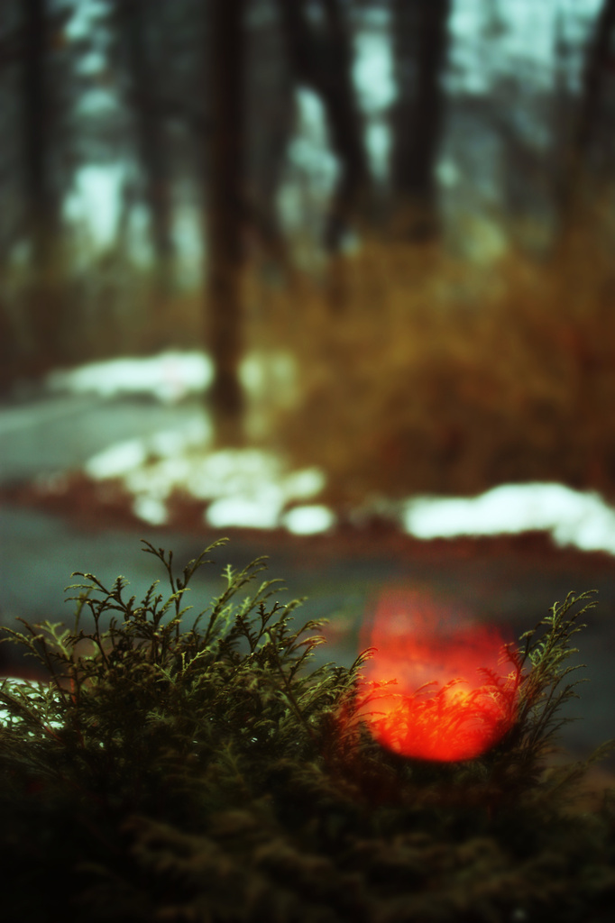 Burning Bush by mzzhope
