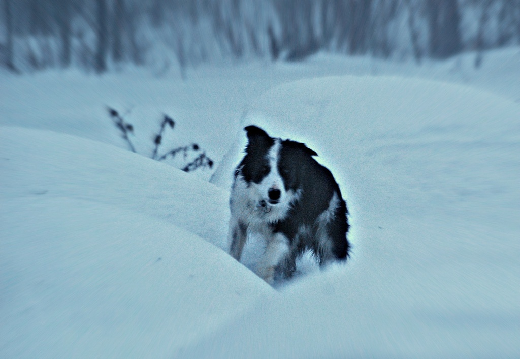 Running Through Snow by farmreporter