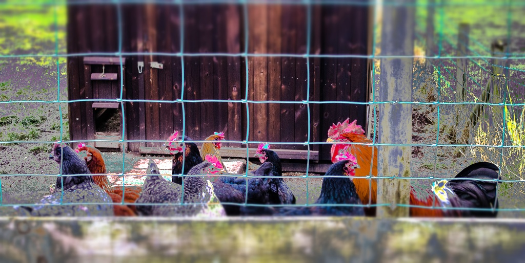 Hen Party by happypat