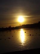12th Jan 2014 - Evening sun in poole park