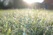 12th Jan 2014 - Frosted dewkeh (quite nice big if you have the time or the inclination!)