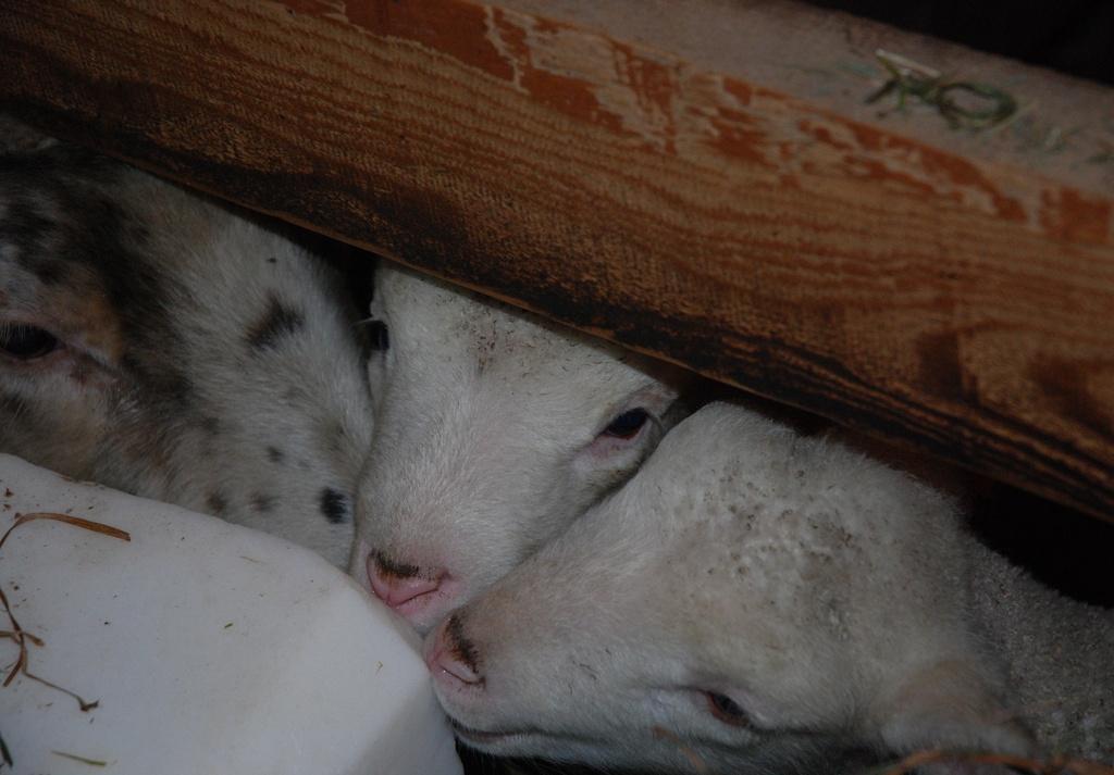 Peeking Through by farmreporter