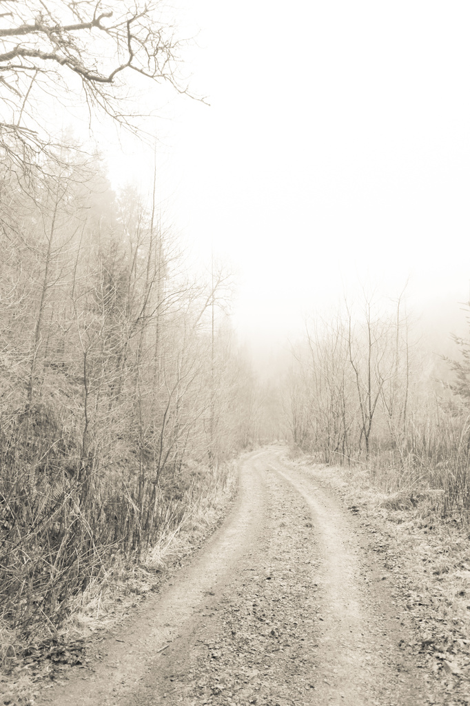 Frost and Mist by rachelwithey