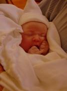 18th Sep 2010 - Introducing Harper ~
