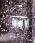 13th Jan 2014 - Fireflies