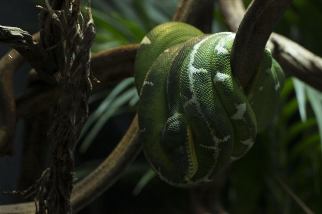 Snake by bizziebeeme