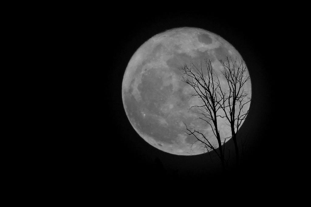 Full Moon  by kimcrisp