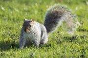 9th Dec 2010 - Poser squirrel