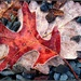 Frost-edged Leaves by olivetreeann