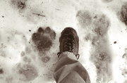 10th Jan 2014 - Bigfoot Bennett