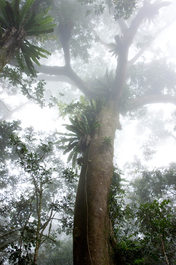 Rainforest in the mist by bella_ss