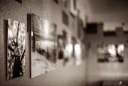 20th Jan 2014 - Gallery