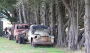 21st Jan 2014 - Old Trucks beneath the Pines..