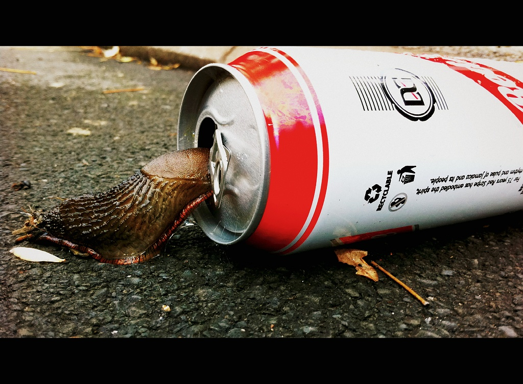 Thirsty Slug by rich57