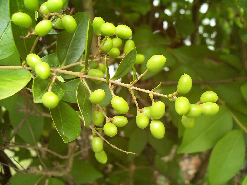 Pretty Green Bush by julie