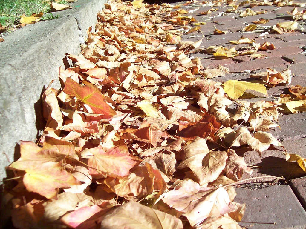 First Fall Leaves by julie