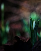 26th Jan 2014 - Green Shoots