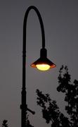"29th Jan 2014 - ""Street Lamp at Dusk""....Berwick Springs..."