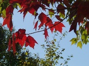 21st Sep 2010 - One Red Branch