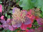 17th Sep 2010 - 365-Autumn colours DSC05343