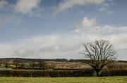 1st Feb 2014 - Over the hedge feb - 1-02